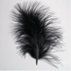 6002  700 - Chick feathers in 20's