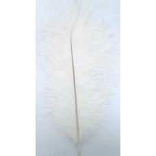 6006  101 - Medium Feathers 10's